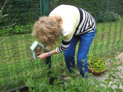 Anne Hesketh checks RSPB new Bee and Bug Home