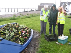 Harbour boat replanted for summer