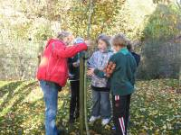 Norma Angus helps monifieth cub scouts with tree recognition