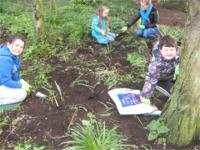 Planting snowdrops in the green