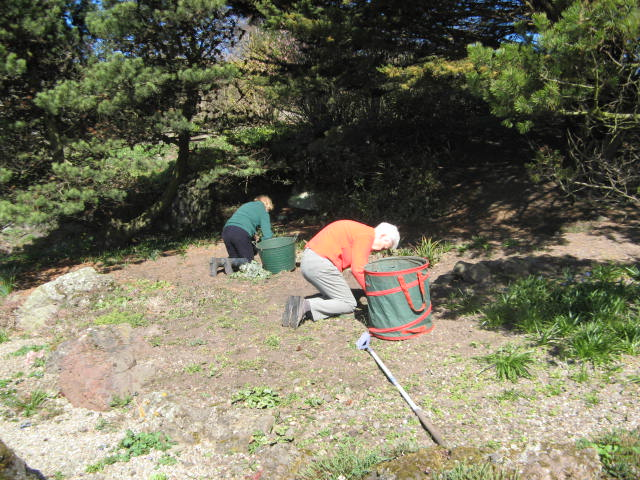 2015 Spring clean-up scree bed
